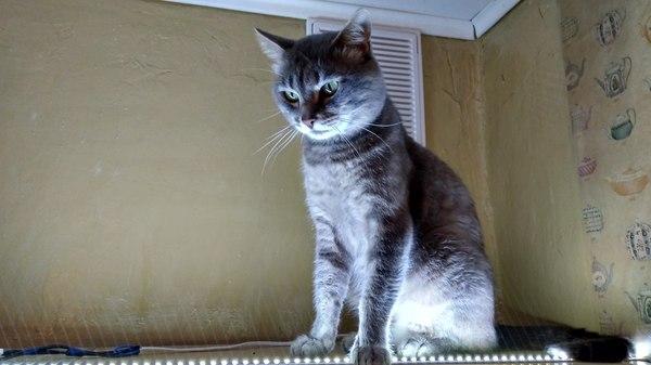 Ищем коту новый дом!!! отдам в хорошие руки, Санкт-Петербург, длиннопост, кот, Помощь