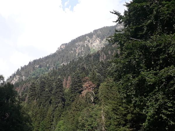 Леса Домбая под угрозой уничтожения. Домбай, Природа, туризм, гринпис, экология, длиннопост
