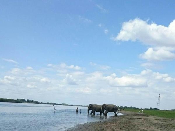 Обычные Индийские слоны на берегу Омского Иртыша. омск, Россия, слоны, необычное, Интересное