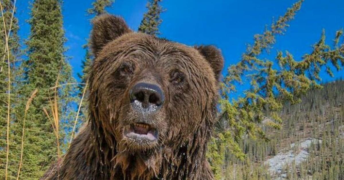 картинки мокрый медведь тебе