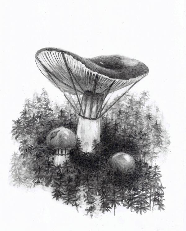Необычные грибы лес, грибы, природа, моё, длиннопост