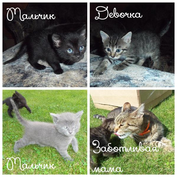 Кому котиков? Москва (Перово, Новогиреево), МО (Балашиха, Ногинск) в добрые руки, котики даром, кот, каждому по котику, котомафия, усатый-полосатый, питомец, кисики