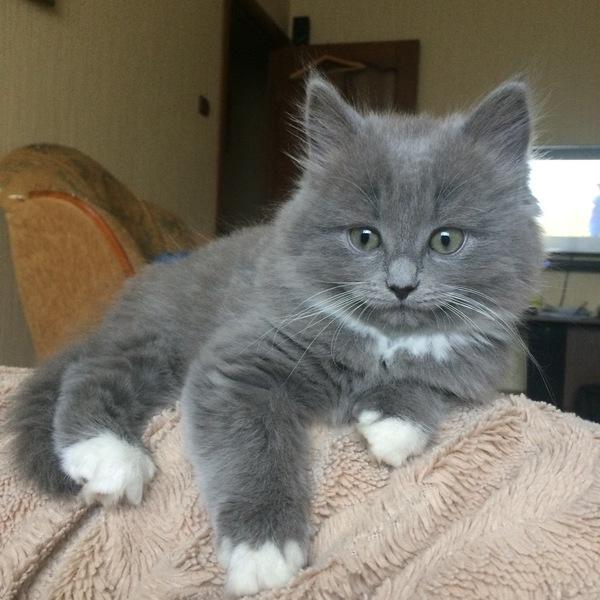 Матильда кот, милота, длиннопост