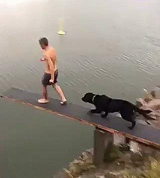 Прыжки в воду ныряние, собака, хозяин, гифка