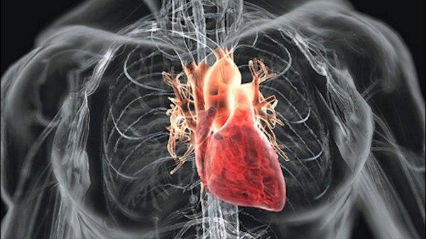 Как натренировать сердце за три недели? ШОК! спорт, тренер, тренировка, программа тренировок, фитнес, мышцы, здоровье, кардио, длиннопост