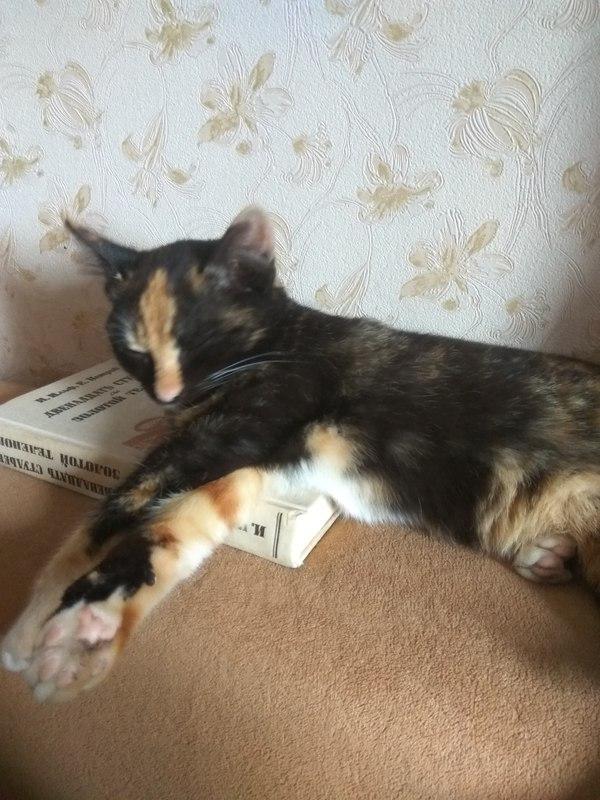 Отдам кошку и все в дополнение, Москва Отдам кота отдам котенка, Кот, В добрые руки, Помощь, Длиннопост