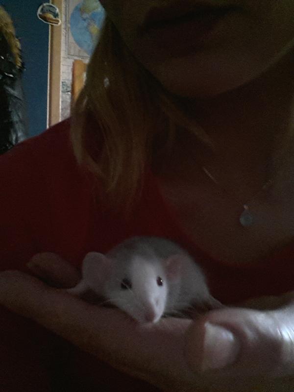 Было / стало (Степан Михалыч) крыса, уши, длиннопост