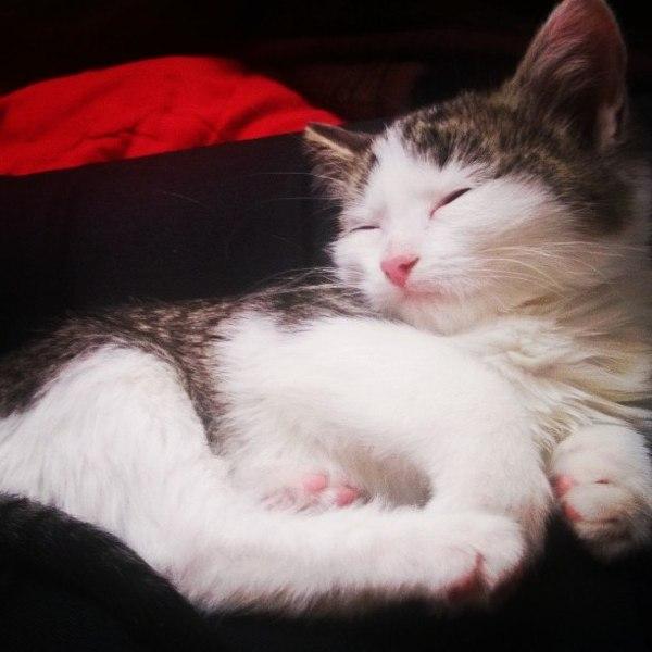 Киса: было-стало кот, питомец, было-стало, длиннопост