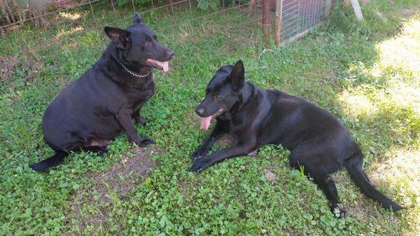 Уважаемые пикабушники, срочно нужна помощь Собака, собачники