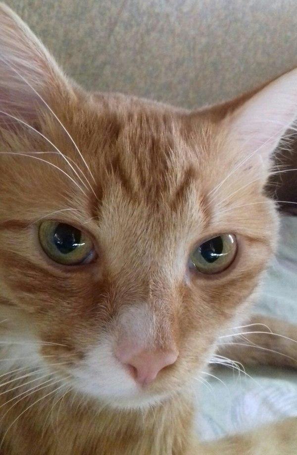 Помогите в поиске кота помогите найти кота, пропал кот, длиннопост, Помощь