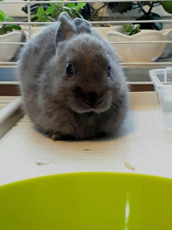 Тучка кролики, фотография, длиннопост