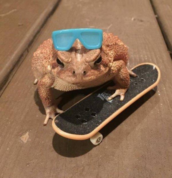 Бодренькой лягушки вам в ленту :3