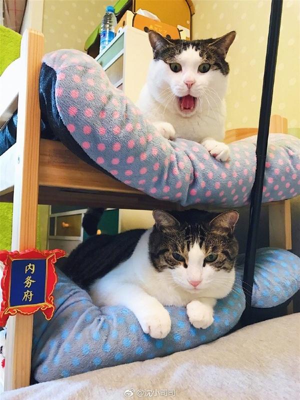 Ньюфаг и олдфаг кот, олдфаги, ньюфаги, длиннопост
