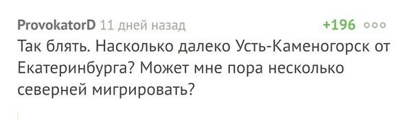 Желтый сак продолжает свой путь паук, Ростов-на-Дону
