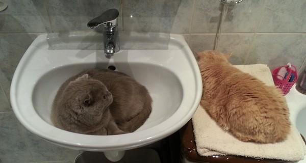 Мои котэ сон, кот, умывальник, длиннопост