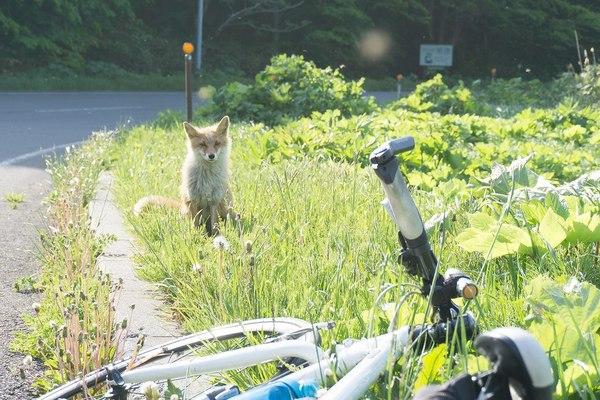 Велосипедный патруль ^.^