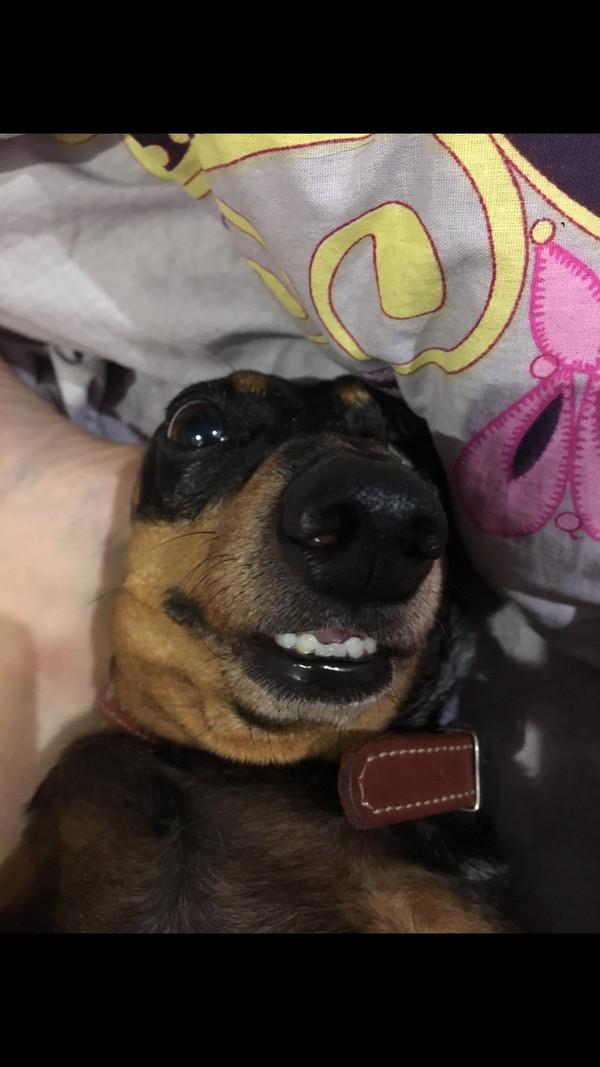 Собакер, на волне постов о домашних животных