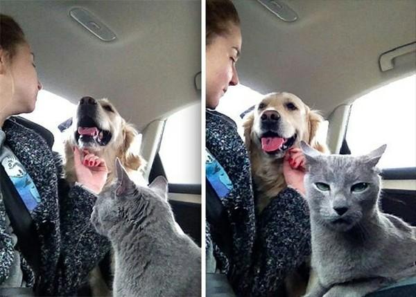 Коты, заслуживающие Оскар Оскар, длиннопост, коты vs собаки, кот, собака