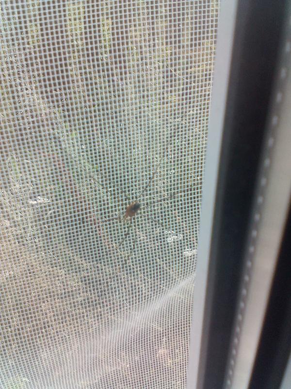 Что это? паук, Хрень, энтомология, длиннопост