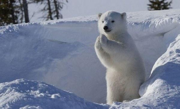 Господи,пожалуйста,пусть мама догонит этого полярника.Время то обедать.