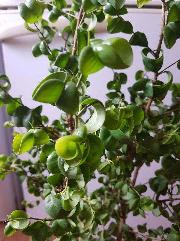 Мичурин. Растениеводство, Вырастить дерево - легко, Длиннопост
