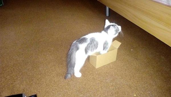 Было и Стало немного опоздал с трендом) кот, было-стало, милота, длиннопост