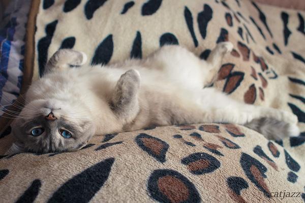 Кот Джаз кот, Кот Джаз, домашние животные, милота, сон, Няша, Пермь