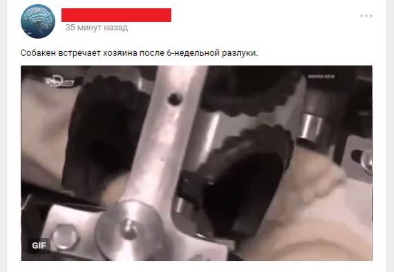 Жратико ВКонтакте, сообщества в вк, Пельменогонный аппарат, гифка