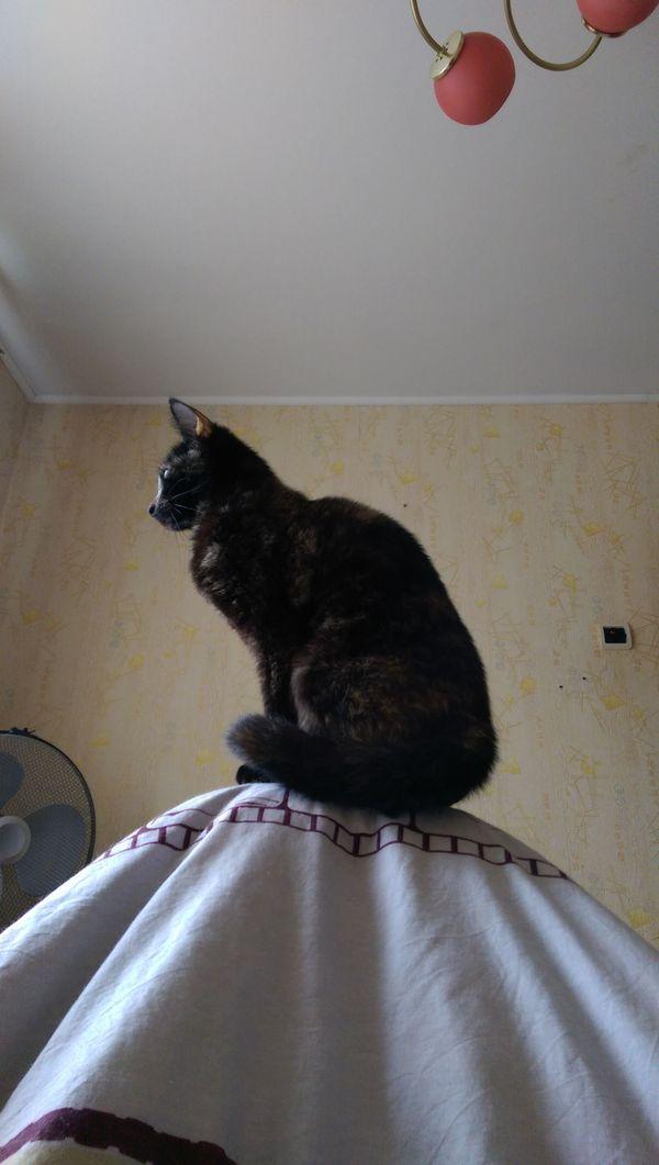 На юг кот, утро, милота