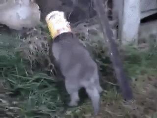 Освобождение лисёнка