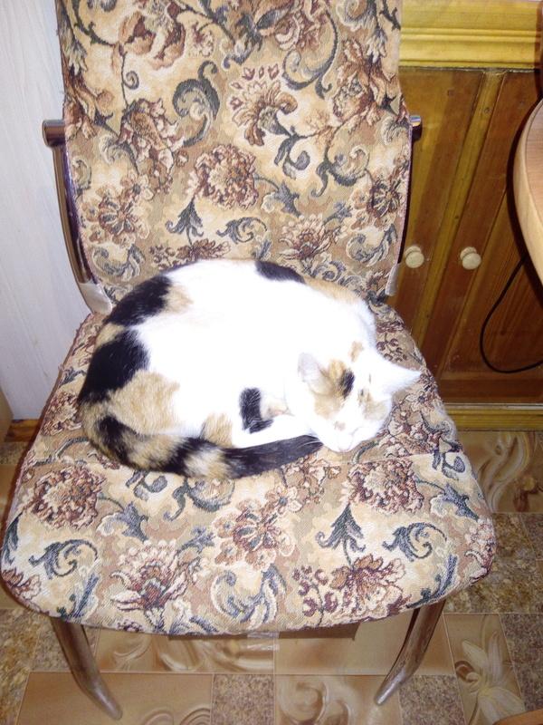 Кошки—мышки трехцветная кошка, Мыши, Охотница, подарок, длиннопост, кот