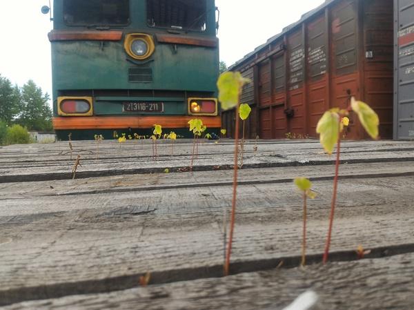 Рабочее. РЖД, поезд, Локомотив, дерево, фотография