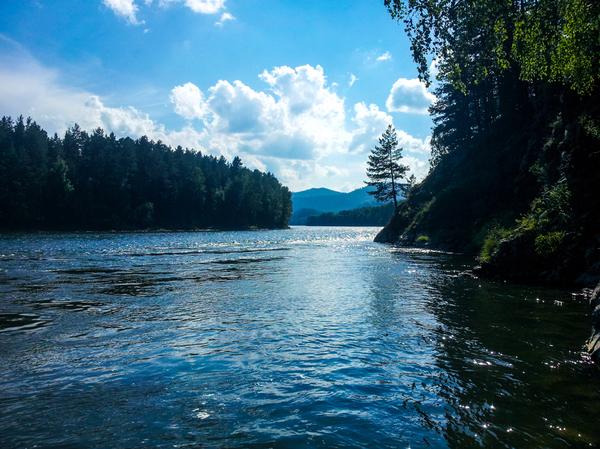 Сибирская река Бия фотография, Река, Бия, Горный Алтай, Скала, Лето