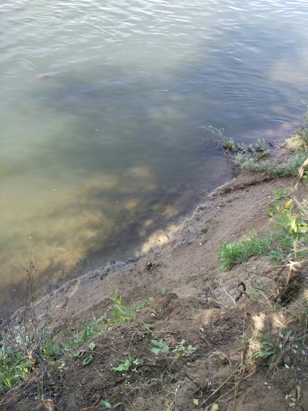 Рандомные фотки с реки Сакмара Природа, Оренбург, Сакмара, Река, водоем, лето, весна, фотография, длиннопост
