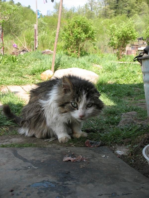 Кот Василий. кот, реальная история из жизни, охотник
