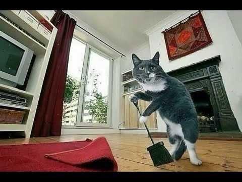 Свершилось! Теперь вы можете валяться в постели, когда ваш кот собирается на работу. Кот, Работа, Справедливость