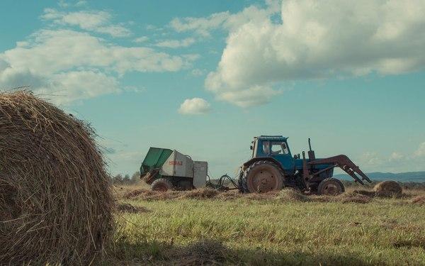 Прогуливаясь по полям Башкирии. Поле, Башкортостан, Трактор, Трава, Пейзаж, Фотография, Сено, Сельское хозяйство