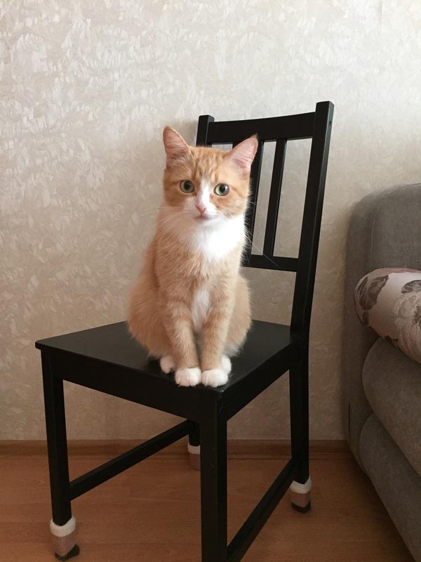 Безысходность и тлен моё, кот, фотография, безнадежность
