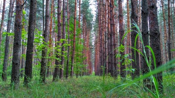 Сельские просторы. Ч.3 воронежская область, пейзаж, лес, фотография, увлечение, село, Природа, длиннопост