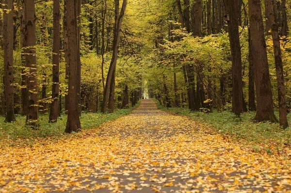 10 дней до... осень, Поэзия, стихи
