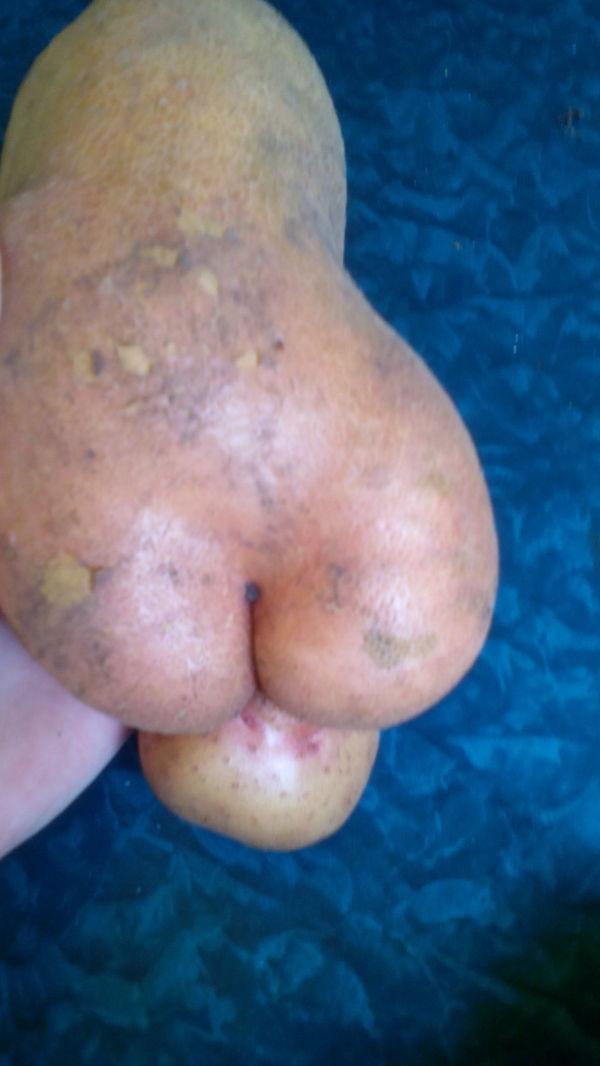 Вдогонку постам с помидорчиками) картофель, килограмм, большой