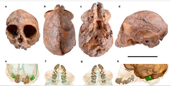 Алеся – общий предок человекообразных? Антропогенез, антропогенезру, Александр Соколов, гоминоиды, Африка, археологические находки, видео, длиннопост