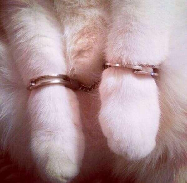 Полиция нравов Животные, домашние животные, полиция, кот