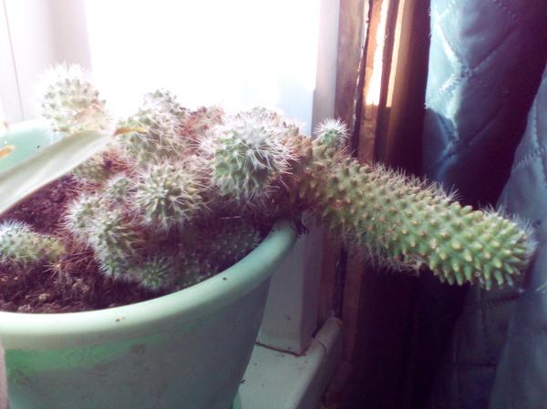 Такой вот х..овый кактус