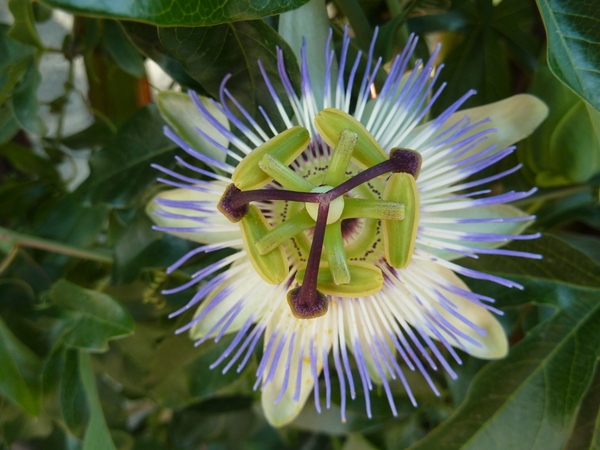 Цветок на изгороди цветок, пчелы, листья