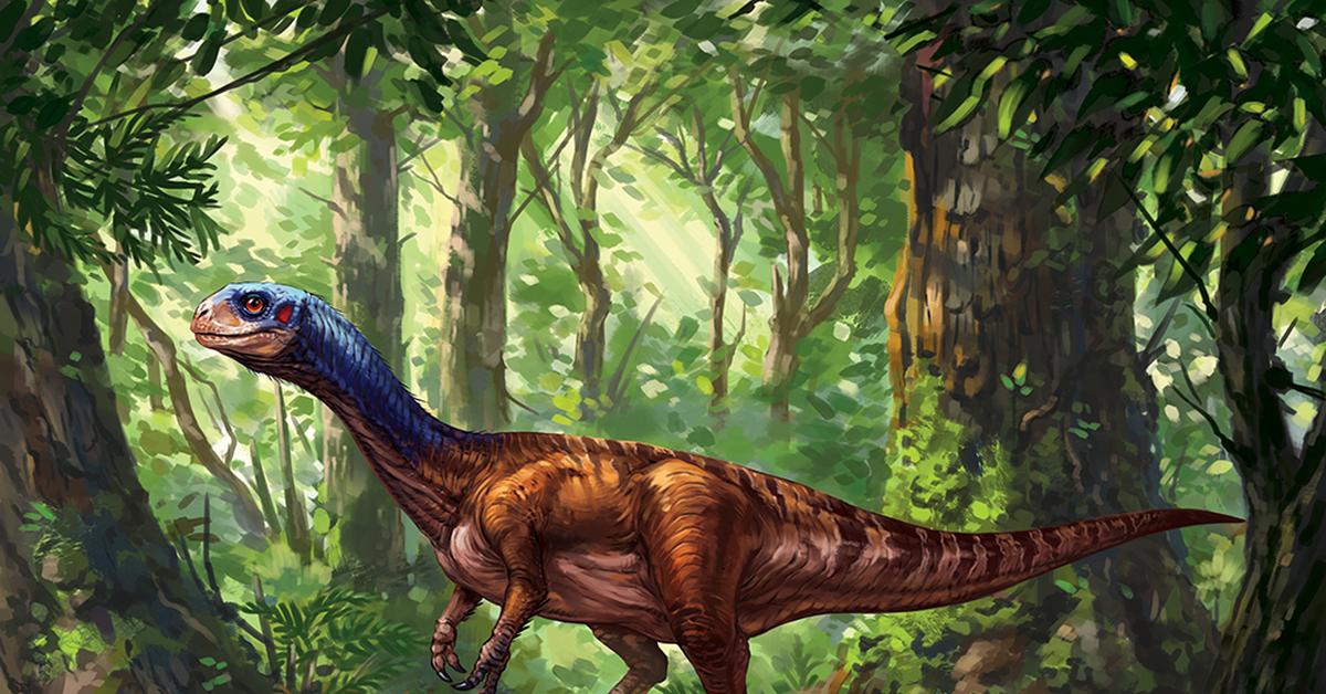 Динозавры картинки и изображения