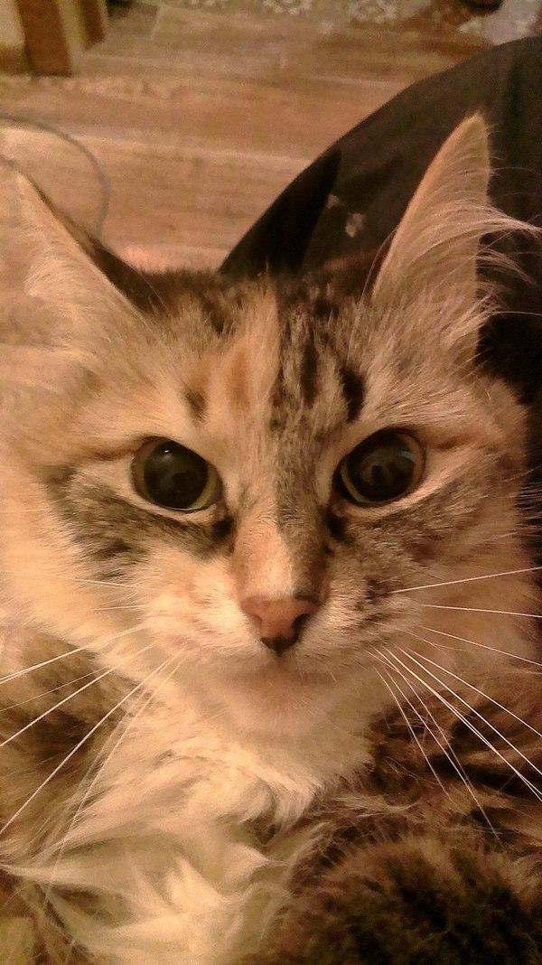 Ну, здравствуй, Пикабу! Кот, Фотография, Моё, Животные, Домашние животные, Первый пост, Длиннопост