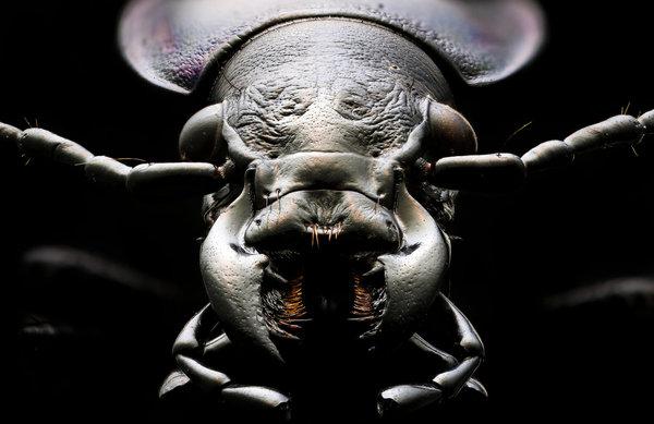 Макросъемка макросъемка, насекомые, длиннопост