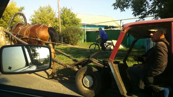 "Иж 2125 ""комби"". 1 лошадиная сила. Транспорт, Гужевая повозка"