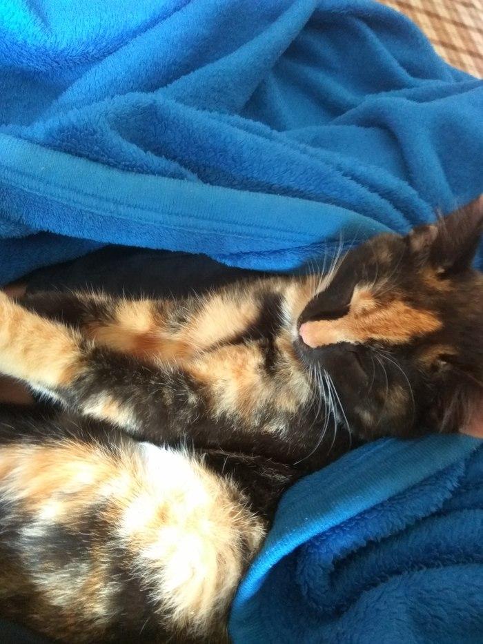 Пикабу, помоги пристроить кошку Кот, В добрые руки, Отдам, Отдамкошек, Помощь, Длиннопост